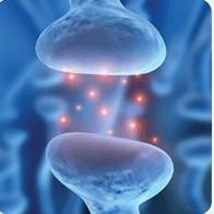 神经传质转运体检测试剂盒  Molecular Devices