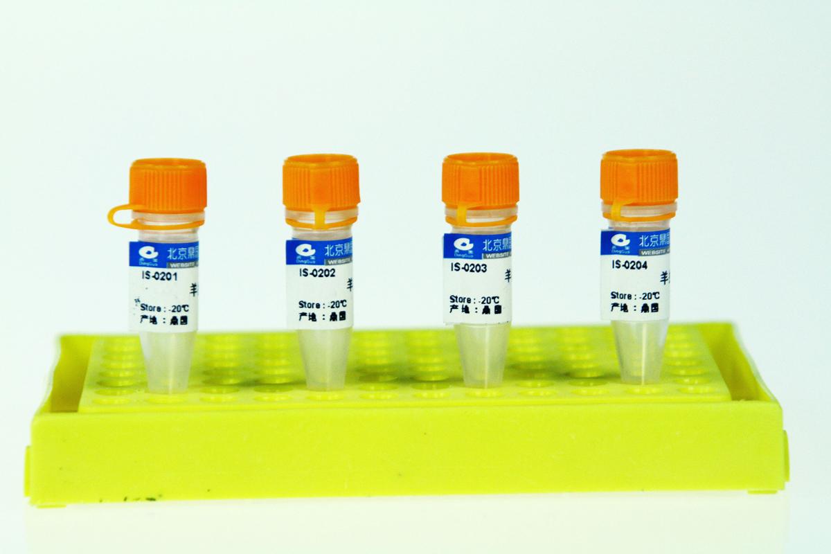 辣根酶标记的山羊抗小鼠IgG