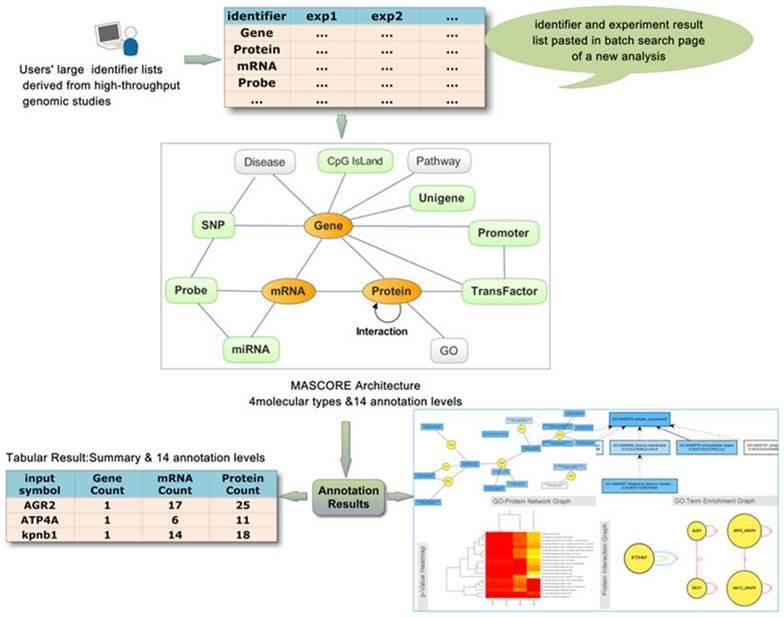 分子功能注释系统(MAS)介绍