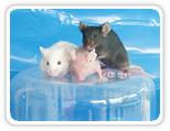 动物活体实验