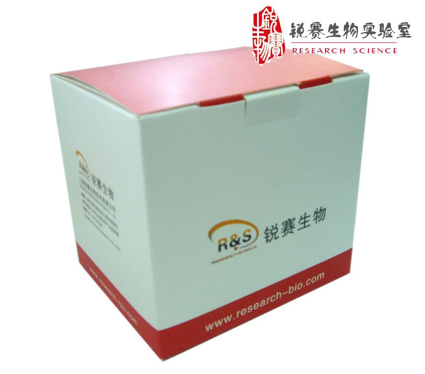 ECL Plus 增强型免疫荧光发光试剂盒