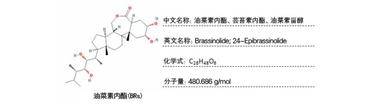 植物样品激素含量检测-油菜素内酯
