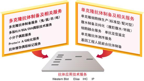抗体修饰偶联标记服务