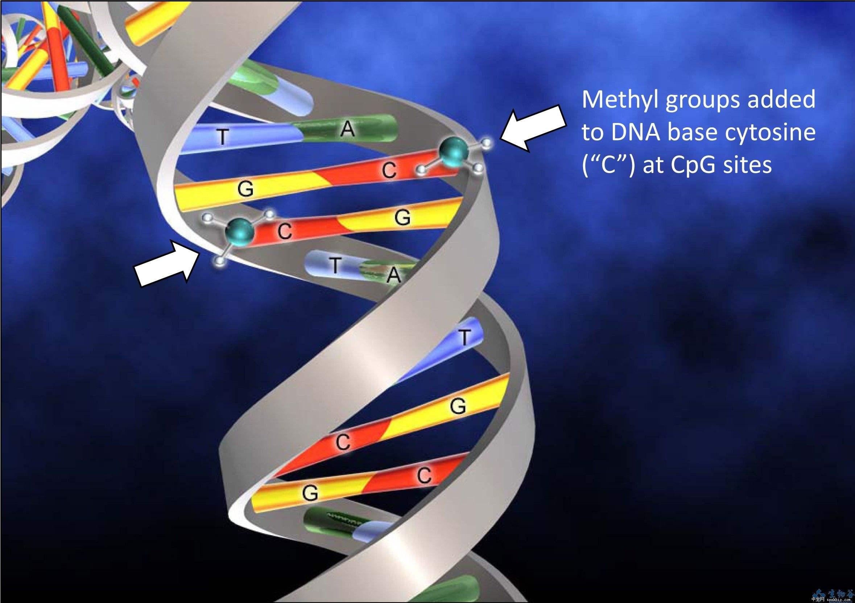 甲基化DNA免疫共沉淀测序分析