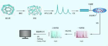 蛋白质谱分析技术服务