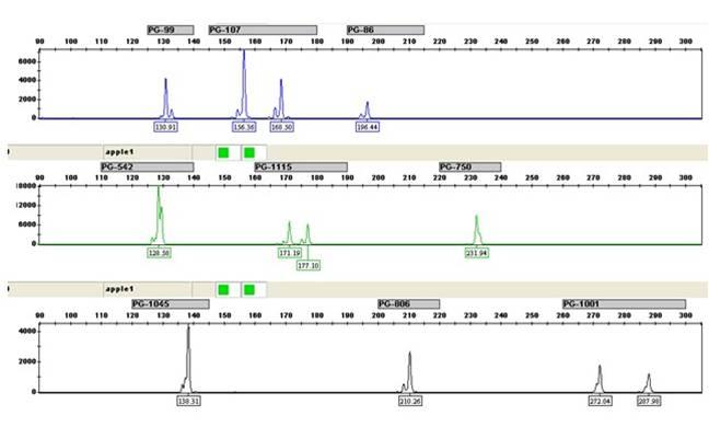 细胞STR鉴定服务