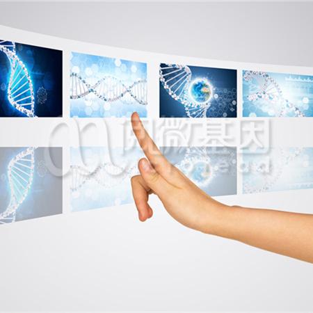 肿瘤个体化化疗用药基因检测试剂盒
