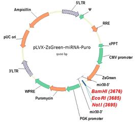 microRNA表达载体构建实验外包服务