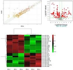 microRNA靶基因验证实验外包服务