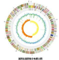 微生物基因组 De novo 测序技术服务