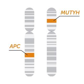 FAP MASTR 家族性腺瘤息肉病二代测序基因组合
