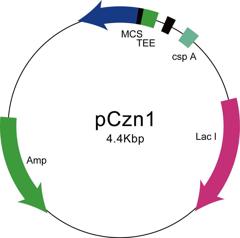 原核蛋白表达5天可溶性蛋白急速交付套餐