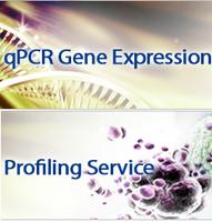 AccuPower® qPCR Array基因表达分析产品现5折优惠