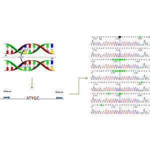 SNP检测分析(单核苷酸多态性分析)
