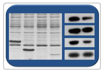 qPCR引物(经实验验证)