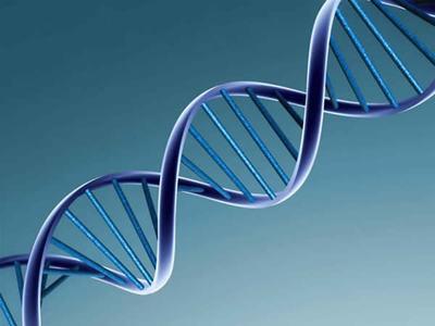 基因突变(点突变服务)