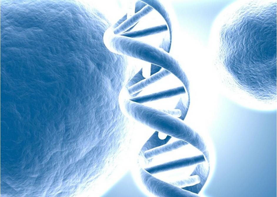 重组生长因子、细胞因子