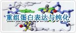 哺乳动物细胞表达系统重组蛋白表达与纯化