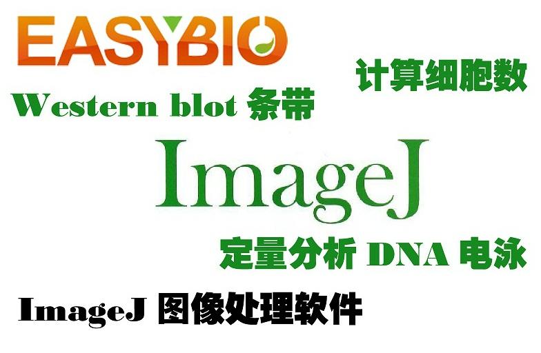 ImageJ生物医学影像分析软件