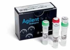 高保真度PCR酶