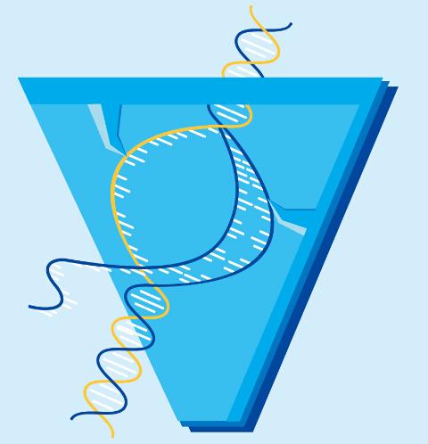 吉凯基因CRISPR/Cas9系列产品,新品优惠!