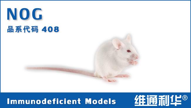 NOG 重度联合免疫缺陷鼠 SPF级