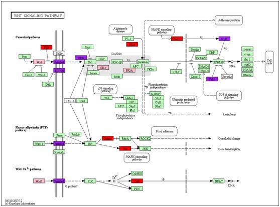 RNAseq数据分析