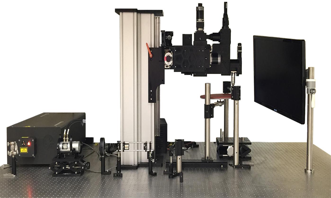 在体共振扫描双光子显微镜