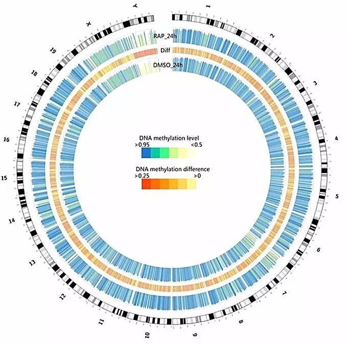 全基因组甲基化