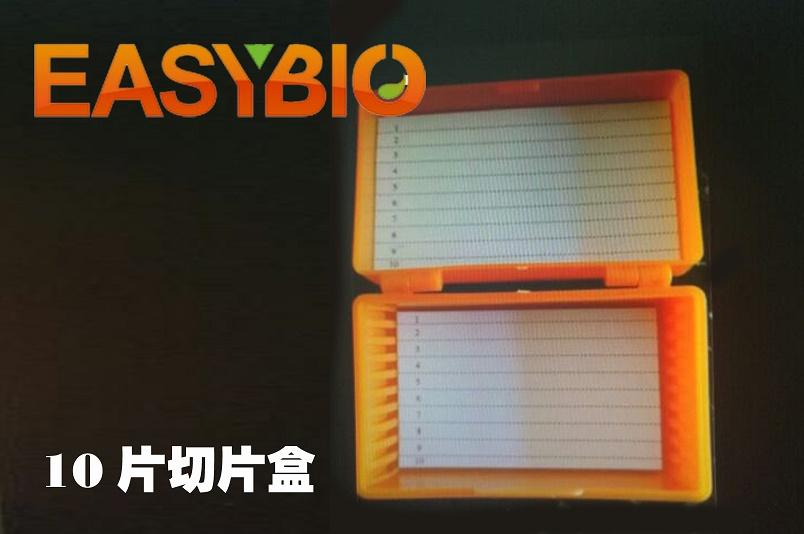 10片装免疫组化湿盒 切片盒