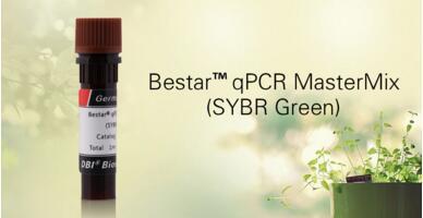 DBI荧光定量PCR试剂(SybrGreen)