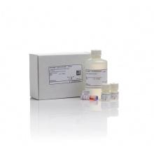 Qubit™ dsDNA BR Assay Kit Q32853现货