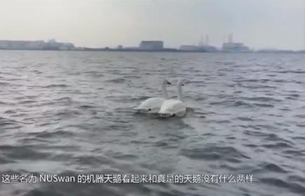 新加坡发明机器天鹅 可实时监测水质状况
